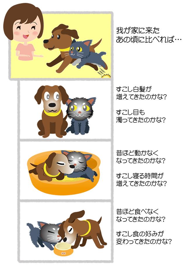 短期集中コース【通信講座】 老犬・老猫の適切なケアを考える - シニア世代の食事・日常ケア・ダイエット  -
