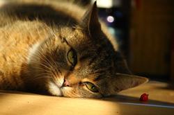元気のない猫