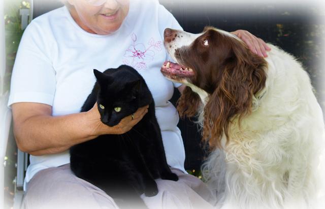 短期集中コース【通信講座】 老犬・老猫の適切なケアを考える - シニア世代の食事・日常ケア・ダイエット