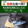 犬と猫に危険な食べ物?3