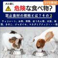 犬と猫に危険な食べ物?2